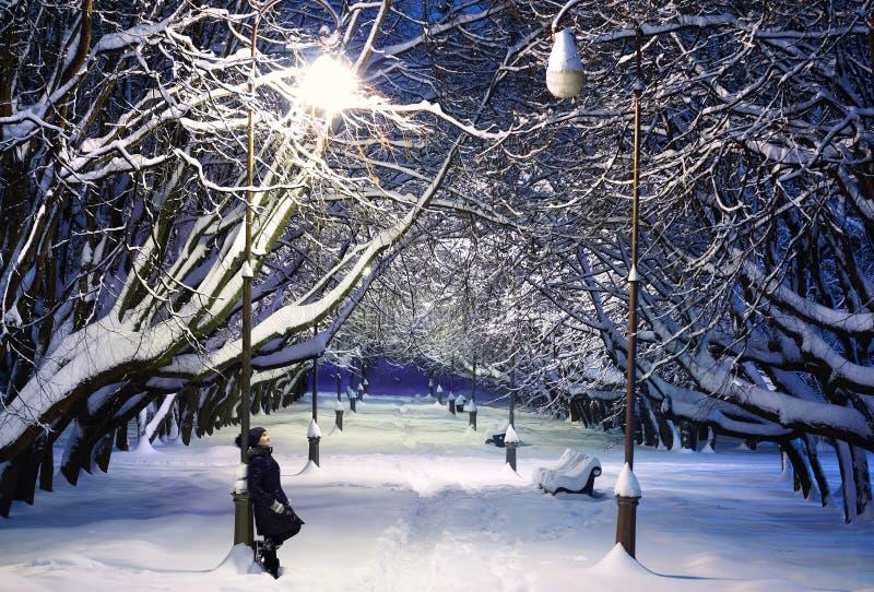 темная морозная зима парка ночи стоковое фото rf