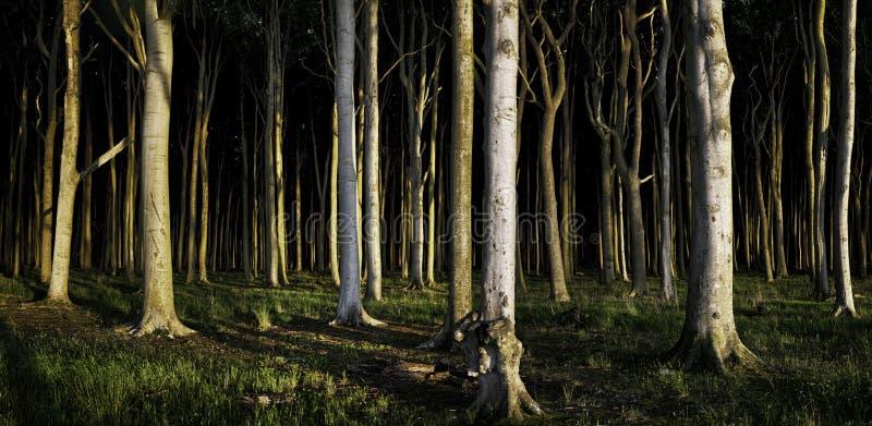 Темная панорама леса стоковое изображение