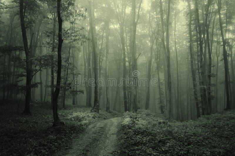 темная пуща тумана стоковое изображение rf