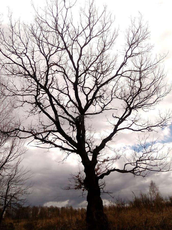 темная древесина стоковое фото