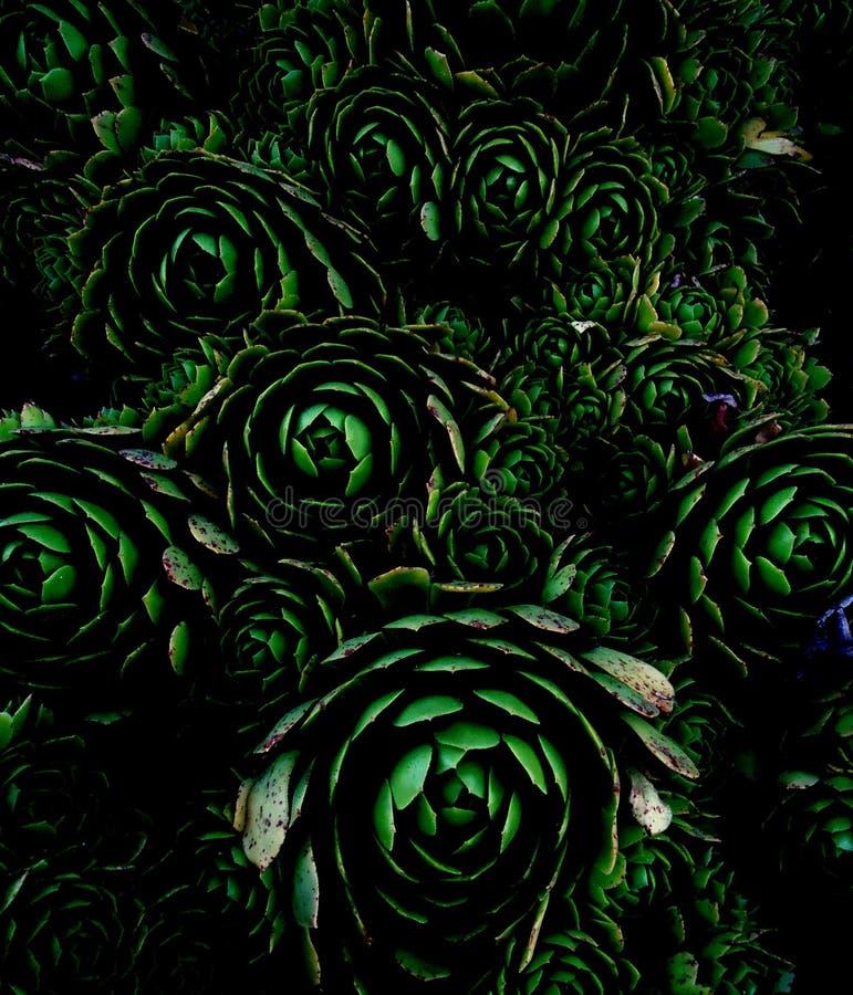 Темная флора стиля стоковое изображение