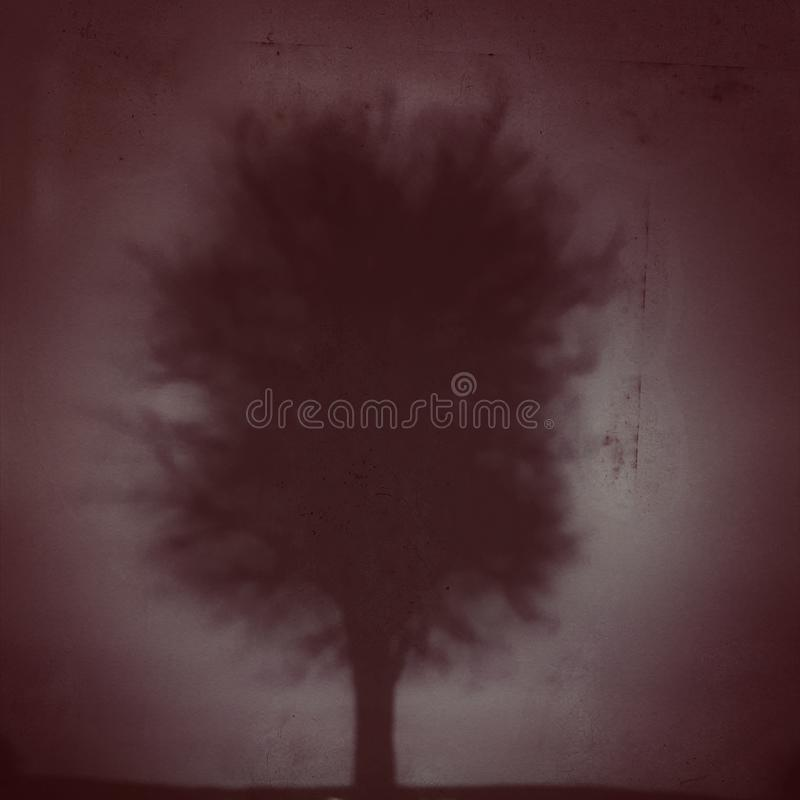 Темное дерево в тумане стоковое фото rf