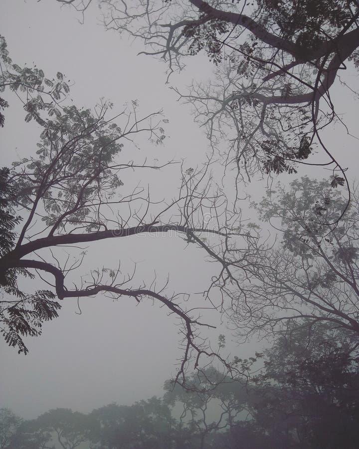 темное forrest стоковое фото rf