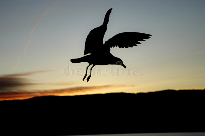 темнота ангела стоковые фото