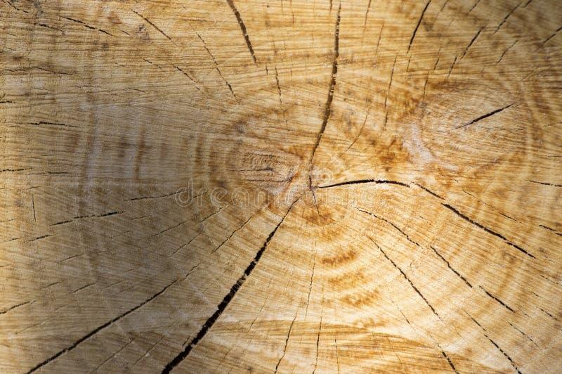 Темнота затеняла деревянную текстуру предпосылки кольца дерева, плоскую зону с кругами и отказы, коричневые цвета, отрезок дерева стоковая фотография