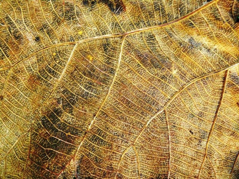 Темнота линии детали на сухой текстуре лист стоковые фото