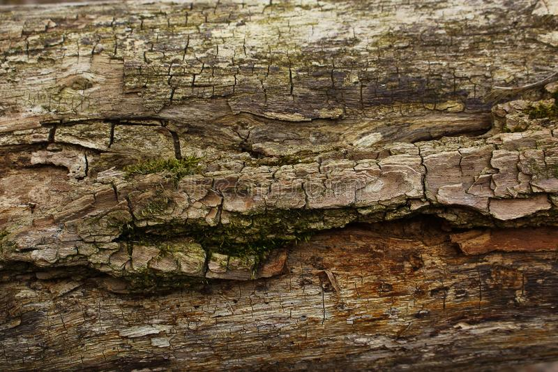 Темно-коричневая кора с зеленым мхом стоковые фотографии rf