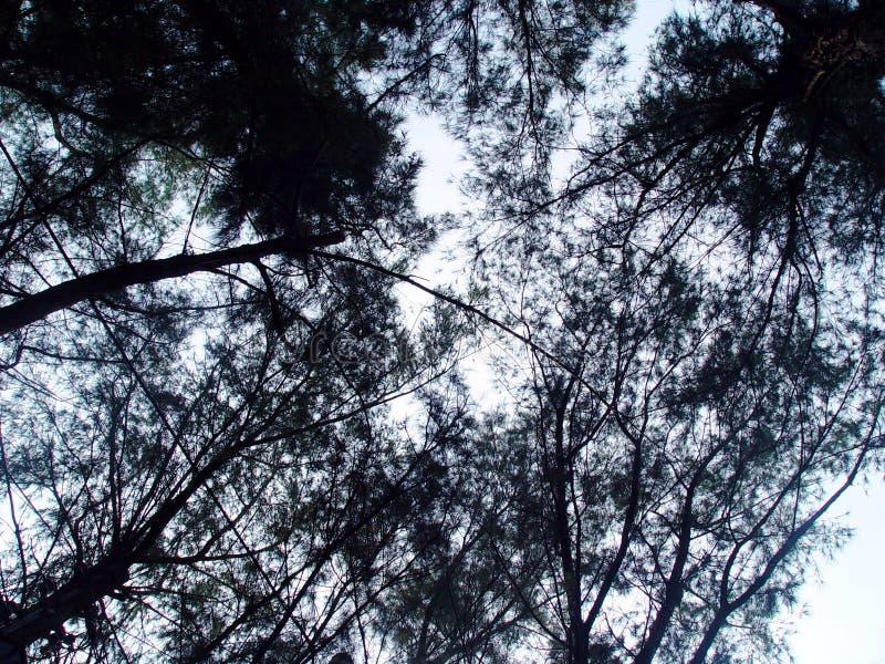 темные древесины стоковая фотография