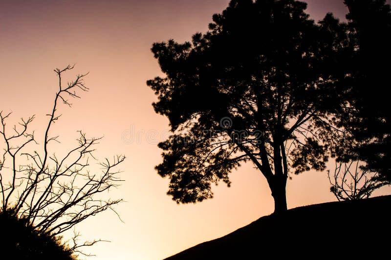 Темные деревья в розовом небе захода солнца стоковая фотография