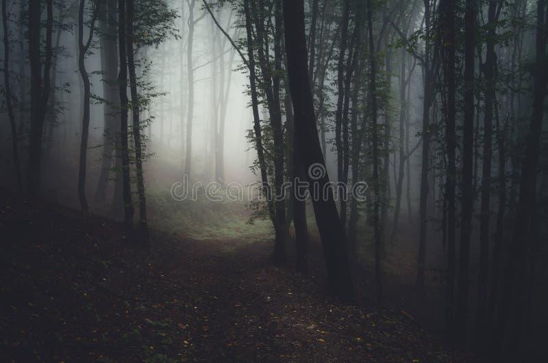 темные древесины стоковое изображение