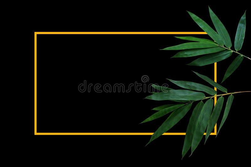 Темные ые-зелен листья бамбукового завода леса на черной предпосылке с планом рамки границы золота желтым стоковое фото
