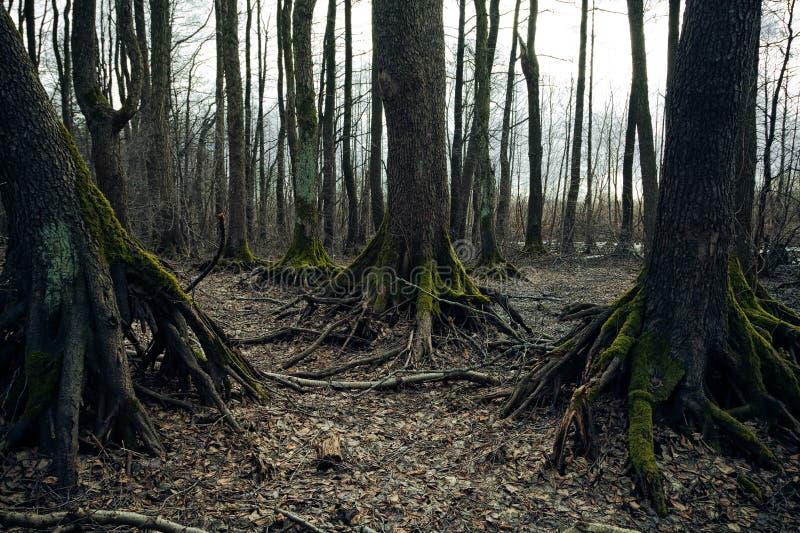 Темный лес стоковая фотография