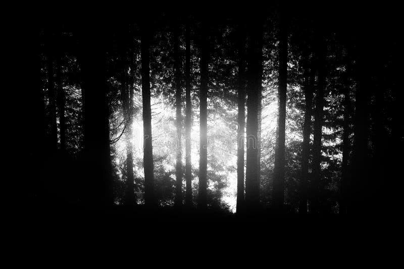 Темный и страшный шум леса добавил для настроения стоковые изображения