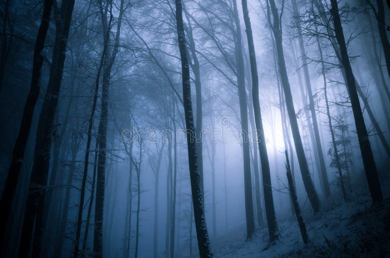 Темный и туманный лес зимы стоковое фото rf