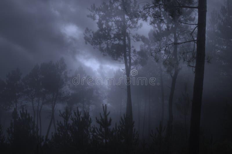 Темный лес в пасмурной ночи стоковые фотографии rf