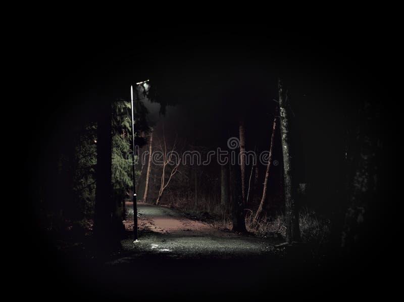 Темный пугающий путь стоковые фотографии rf