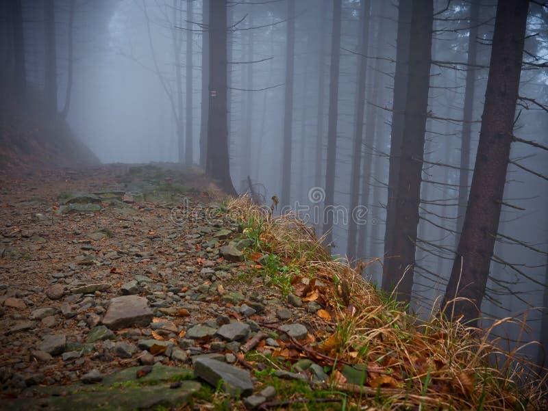 Темный путь в дереве в тумане стоковые изображения rf
