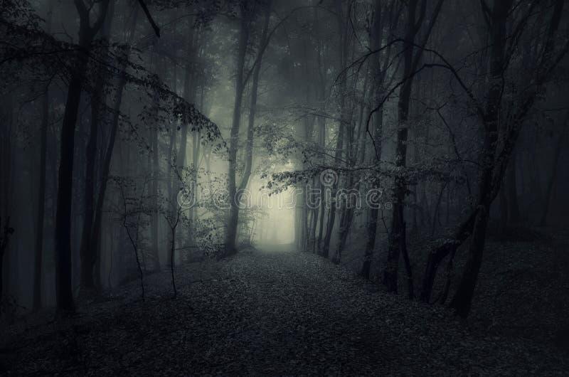 Темный путь в преследовать древесинах на ноче стоковое изображение rf