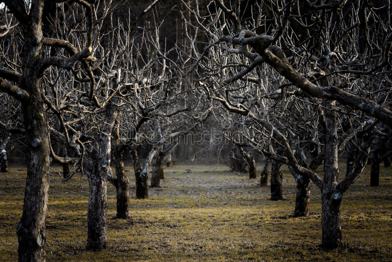 Темный сад стоковое фото rf