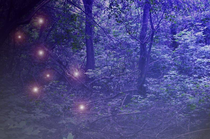 Темный туманный лес от ужасного сказа стоковое фото