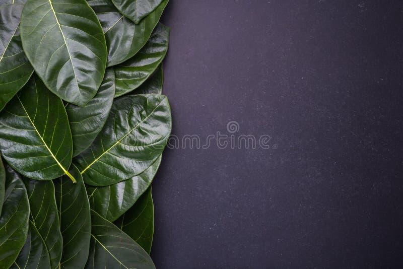 Темный ый-зелен цвет дерева джекфрута выходит на черный bac камня стоковые изображения rf