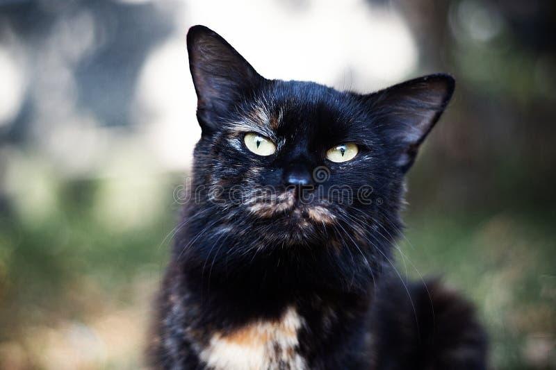 Темпераментный бездомный черный кот смотрит вас в большом городе стоковые изображения rf