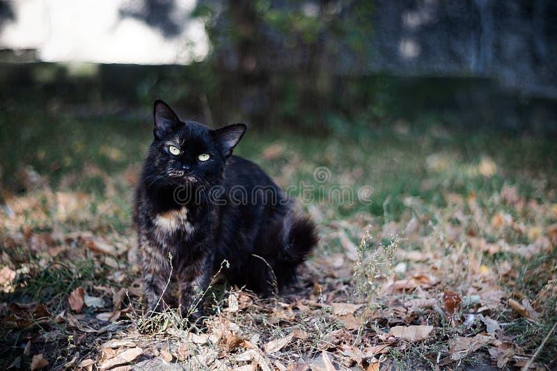 Темпераментный бездомный черный кот смотрит вас в большом городе стоковые фотографии rf