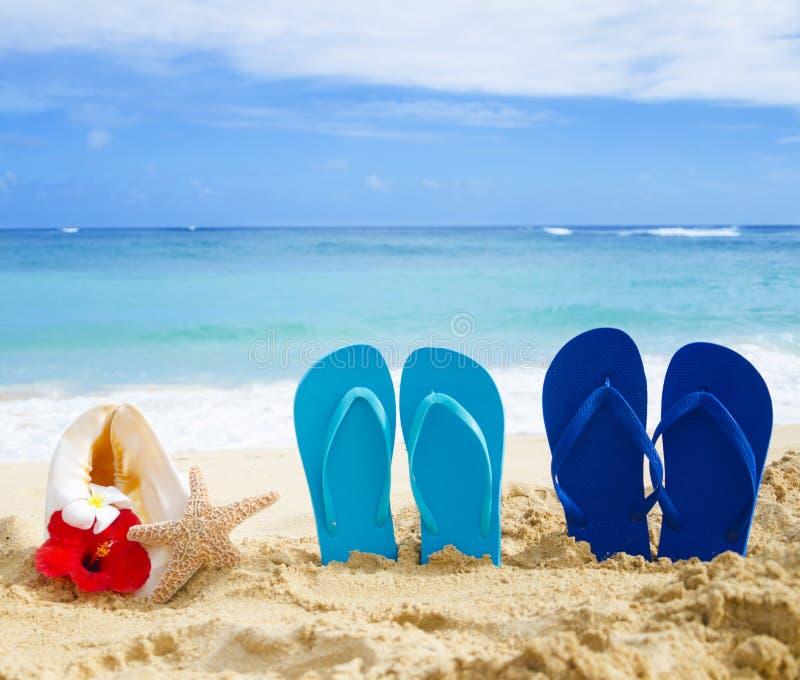 Темповые сальто сальто, seashell и морские звёзды с тропическими цветками на песочном стоковое изображение