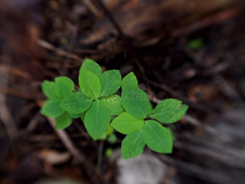 Темп роста завода новых листьев молодой зеленый маленький стоковое фото
