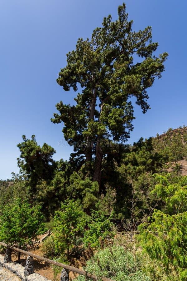 Тенерифе Канарские острова tenerife Испания стоковое фото