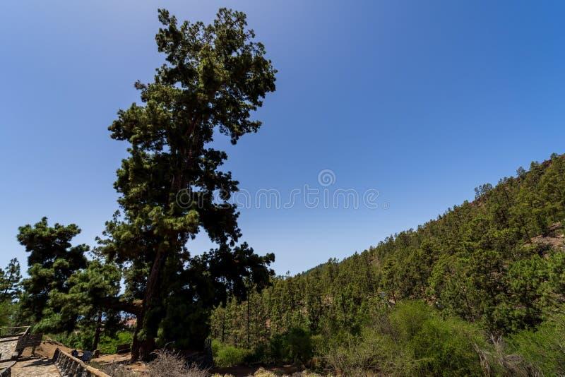 Тенерифе Канарские острова tenerife Испания стоковые изображения rf