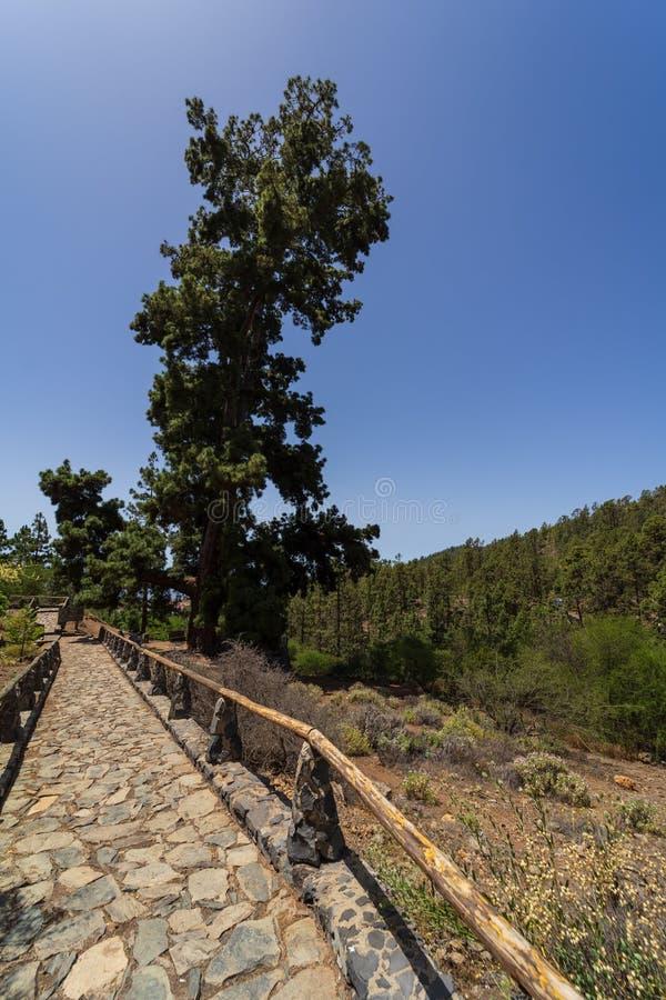 Тенерифе Канарские острова tenerife Испания стоковое изображение rf