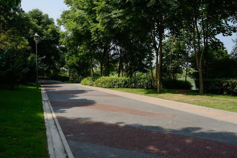 Тенистая покрашенная дорога в солнечном утре лета стоковые фото