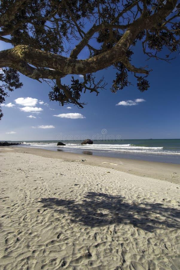Download Тенистое пятно под деревом Pohutukawa на северном пляже острова, Новая Зеландия. Стоковое Фото - изображение насчитывающей песок, лимб: 33731544