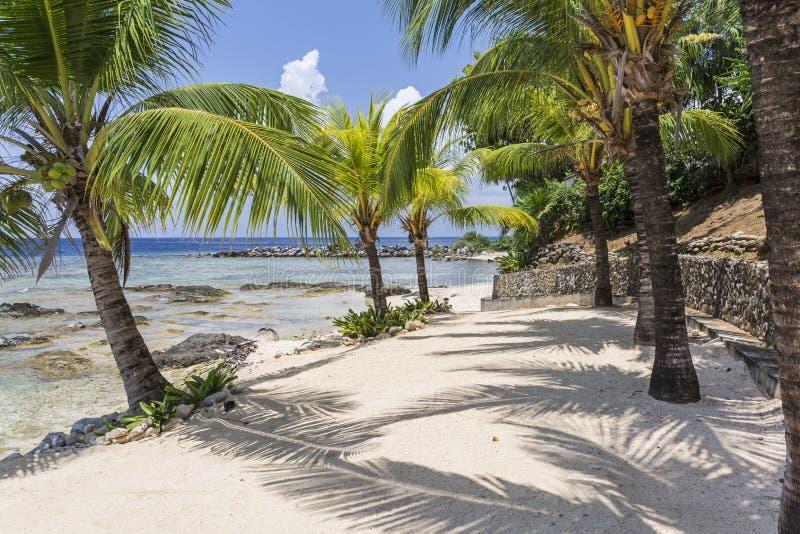 Тени ладони на пляже Roatan стоковые изображения rf