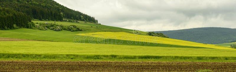 Тени зеленого цвета и древесин ели в холмистой сельской местности, Бадене Wutten стоковое фото rf