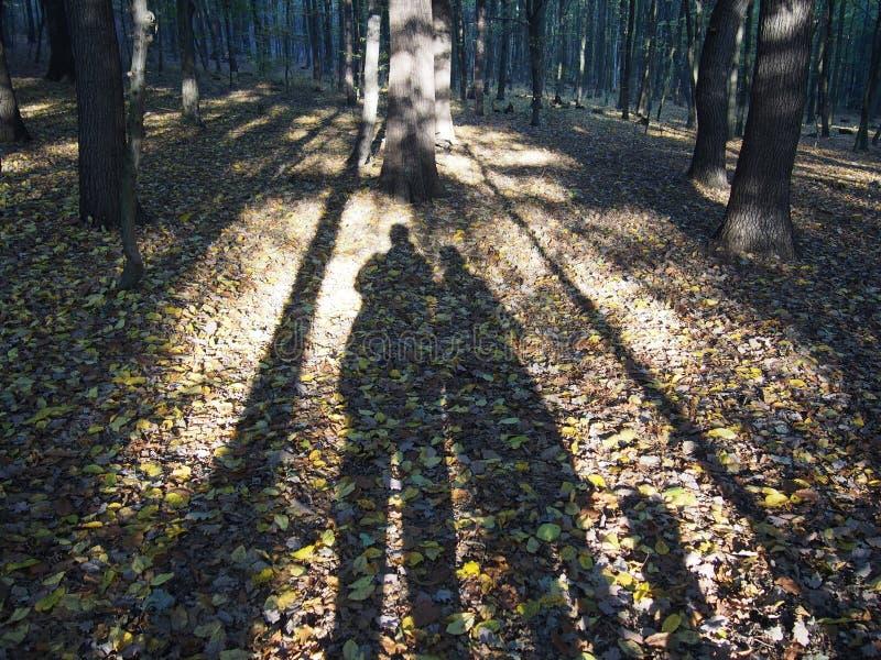 Тени осени пары с собакой стоковые изображения rf
