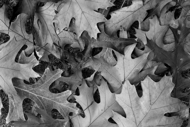 Тени осени стоковая фотография rf