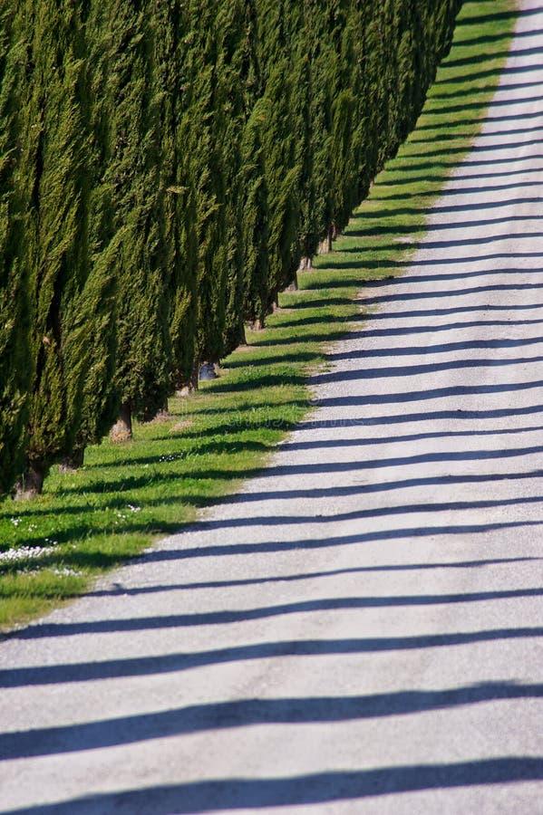 тени Тоскана кипарисов стоковое изображение