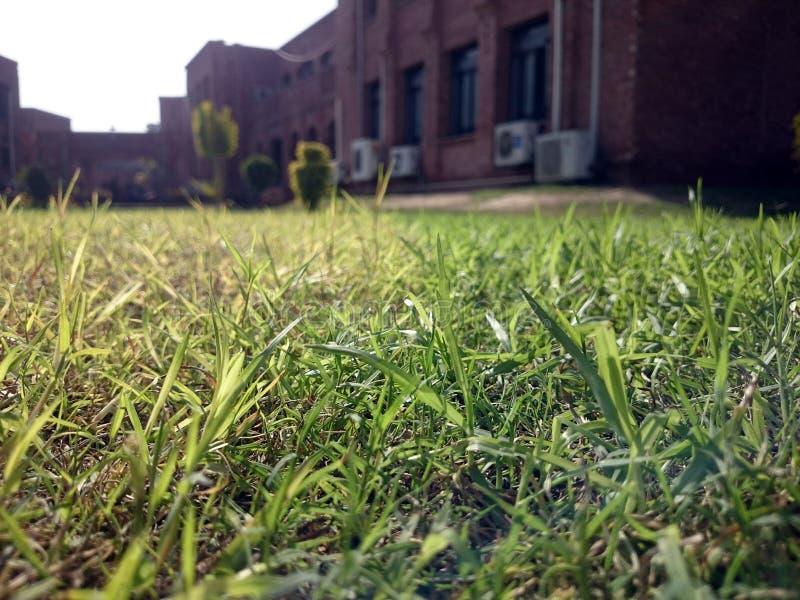 Тени травы стоковые фотографии rf