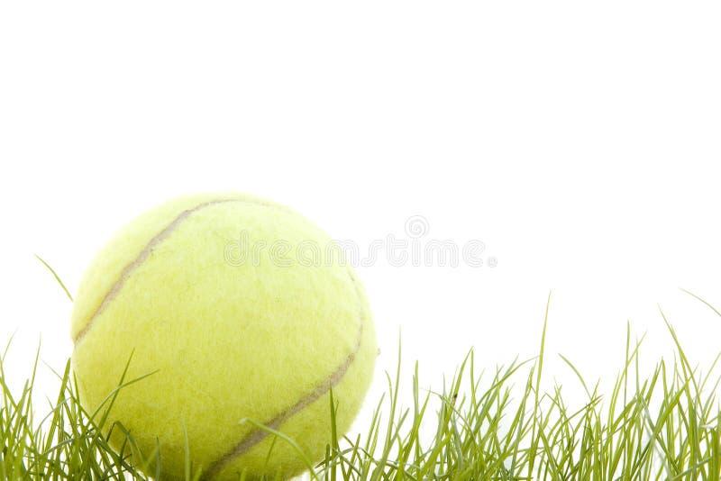 теннис травы шарика стоковое изображение rf