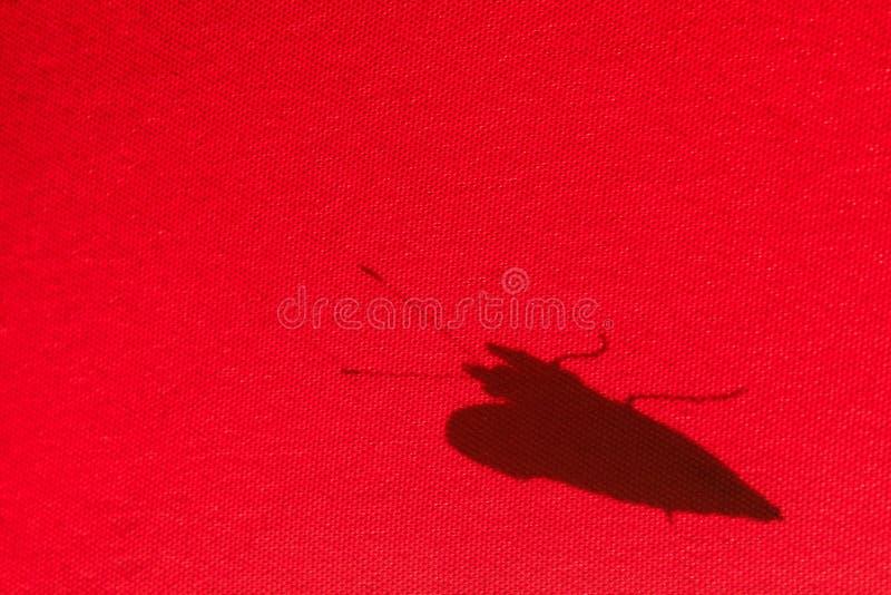 Тень бабочки на красном парасоле стоковая фотография rf