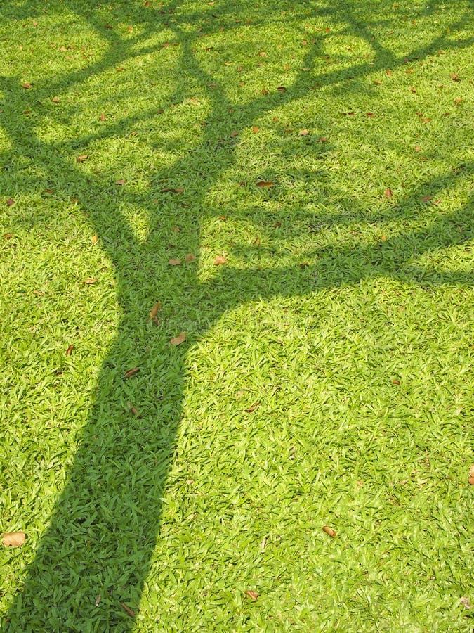 Тень большого дерева стоковое фото rf
