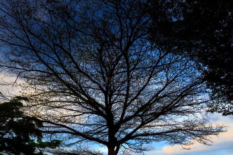 Тень весны дерева под красивым небом стоковое изображение
