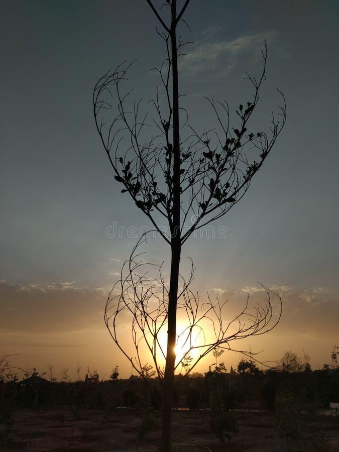 Тень дерева стоковые изображения rf