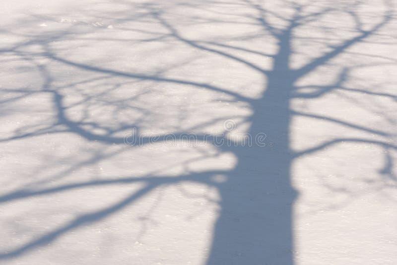 Тень 1 дерева зимы стоковое фото