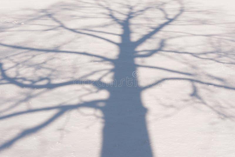 Тень 2 дерева зимы стоковое изображение