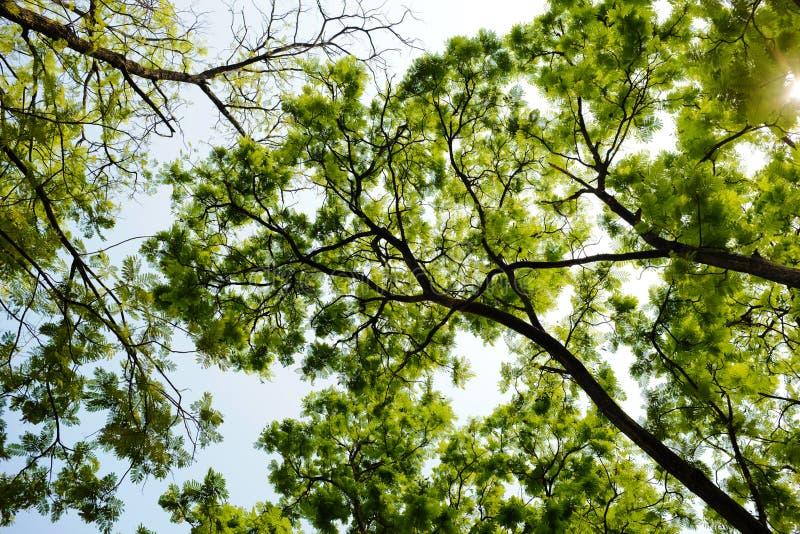 Тень зеленых лист стоковые изображения