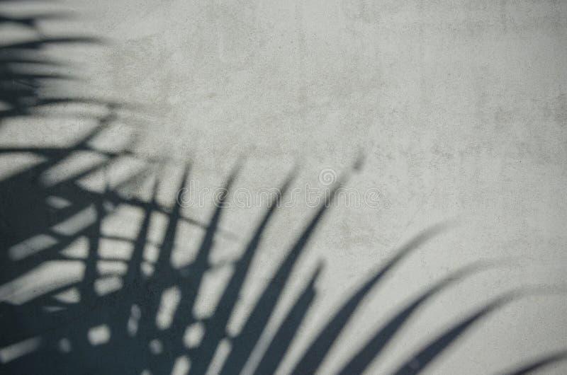Тень лист ладони на стене стоковая фотография