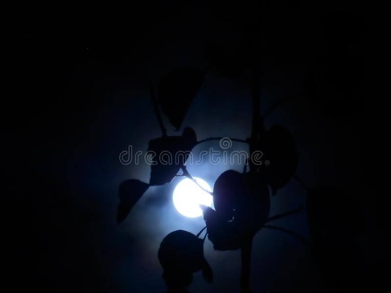 Тень лунного света стоковая фотография